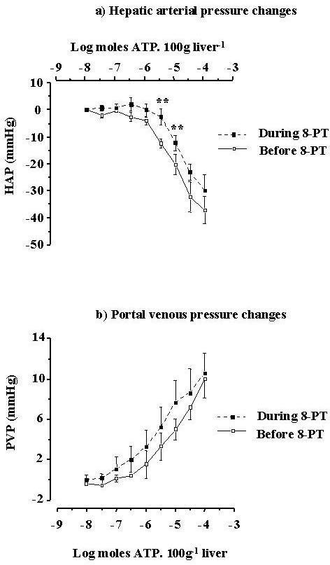 The changes in (a) hepatic arterial pressure responses (Δ HAP) and (b) portal venous pressure responses (Δ PVP) to intra-portal injection of ATP. The adenosine receptor antagonist 8-phenyltheophylline (10 μM) significantly decreased hepatic arterial responses to ATP, while portal venous responses were unaffected (** p < 0.01, compared with before 8-SPT). The error bars in the graphs represent the SE.