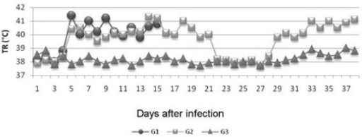 Mean rectal temperature (RT) values of goats infected experimentally with T. vivax (G1 and G2) and non-infected goats (G3) as a function of the experimental period, in dpi.