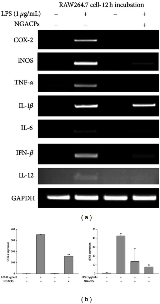 Effect of NGACP treatment on the expression of proinflammatory mRNA. ((a) and (b)) The mRNA levels of proinflammatory genes (COX-2, iNOS, TNF-α, IL-1β, IL-6, IFN-β, and IL-12) were determined using semiquantitative RT-PCR or real-time PCR. *P < 0.05 and **P < 0.01 compared to control.