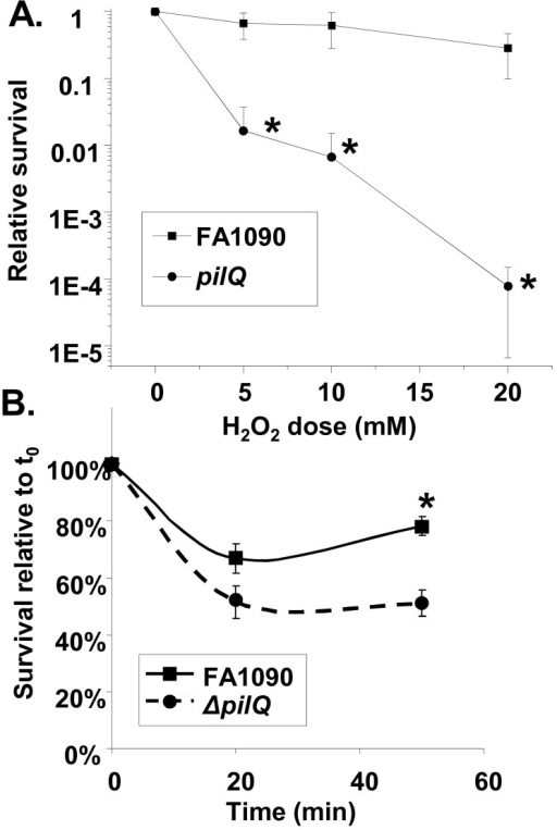Resistance of pilQ mutant strains to H2O2 and PMN-mediated killing. (A) Dose-response curve of H2O2 resistance after 15 min of treatment of the pilQ mutant strain. *, P < 0.02. (B) Resistance of the pilQ mutant strain to PMN-mediated killing. *, P < 0.0005 (Student's two-tailed t test).