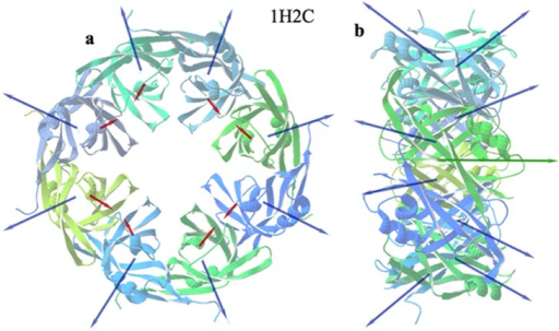 Ebola virus capsid assembly.Front (a) and side (b) views of the eight monomers that compose the Ebola virus matrix protein VP40. Blue arrows represent the individual H vectors of the ensemble. Red arrows are the individual D vectors. The green arrow in the centre is the net H vector. The net D vector is virtually zero.