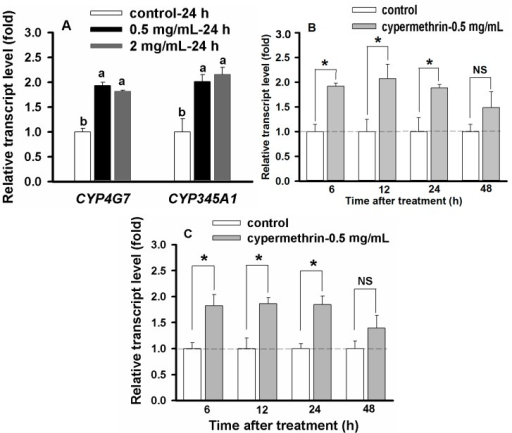 Cypermethrin concentration and time dependent up-regulation of CYP4G7 and CYP345A1 in 20-day larvae. Controls were normalized as 1.0, and the relative transcript levels of CYP genes were calculated based on their corresponding controls. (A) Cypermethrin concentration dependent up-regulation as measured at 2 and 0.5 μg/mL with the exposure time of 24 h. Different letters above the standard error bars indicate significant differences based on the one-way ANOVA followed by Tukey's HSD multiple comparison test (p < 0.05); (B) Time dependent up-regulation of CYP4G7 by cypermethrin (0.5 μg/mL) as measured at 6, 12, 24 and 48 h; and (C) Time dependent up-regulation of CYP345A1 by cypermethrin (0.5 μg/mL) as measured at 6, 12, 24 and 48 h. Dash lines represent relative transcript level of the control (larvae treated with the insecticide solvent only) as 1.0. Statistical analysis was conducted to compare the expression levels between the control and the insecticide-treated insects within the same time duration by using Student's t test. Asterisk above the standard error bars indicates significant difference whereas NS indicates no significant difference.