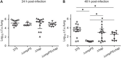Bacterial loads in the lungs of CD1 mice infected by NTHi375 mutant strains lacking the ompP5 and hap genes.Mice were infected intranasally with ~108 bacteria. Bacterial counts in lungs at 24 or 48 h PI were determined. Results are reported as log10 c.f.u./lung. Statistical differences were seen at 48 h PI.