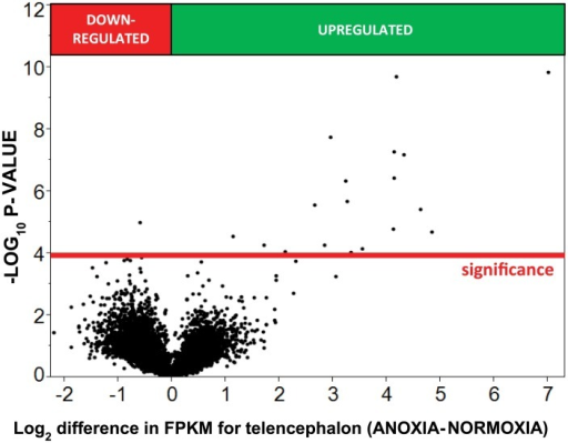 Volcano-plot showing transcriptomic changes in telencephalon after 24 hours of anoxia at 19°C.The y-axis represents the −log10 of the P-value while the x-axis represents the log2 differential expression for each gene. Differential expression was determined using ANOVA assuming a log-normal distribution. The red reference line represents the significance threshold calculated from the FPR multiple testing correction.