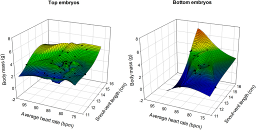 3D plot of mean embryo heart rates recorded throughout incubation plotted against hatchling snout-vent length against hatchling body mass in top (left panel) and bottom (right panel) embryos.Hatchling snout-vent length and body mass were largely explained and positively correlated with average embryo heart rates during incubation in bottom embryos. Such relationship however, was much less pronounced in eggs where the embryos were located at the top of the egg (see text for statistical results).