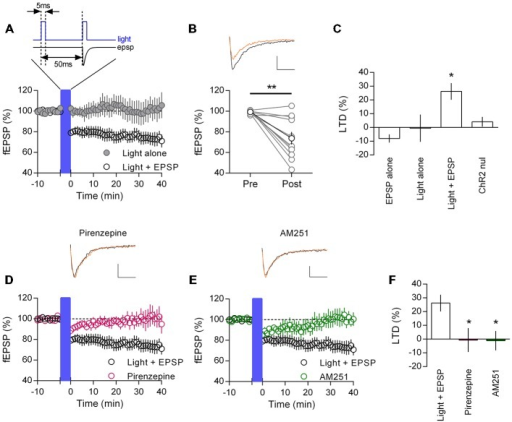 Endogenously released acetylcholine coupled to excitatory synaptic activity induces CB1R mediated LTD in mouse mPFC. (A) Time course of normalized field EPSPs in ChR2:ACh mouse challenged with a coupled light—EPSP 1 Hz stimulation train (1200 pulses (blue bar), protocol above). Coupled light and EPSP time course (clear circles, n = 11), light alone without EPSP time course (gray, n = 5). (B) Normalized field EPSPs from individual experiments at baseline (Pre) and 40 min after (Post) light—EPSP stimulation protocol, in black group average (**P < 0.01). Above: example traces pre (black) and post (orange) light—EPSP protocol (scale bar: 5 ms, 0.1 mV). (C) Summary plot of percent LTD calculated 40 min after end of stimulation protocol (*P < 0.05). (D) ChR2:ACh mouse field EPSP time course challenged with light—EPSP stimulation protocol (blue bar) in presence of M1 mAChR antagonist pirenzepine (0.5 μM, n = 5). Example traces above, pre (black) and post (orange) stimulation protocol. (E) Time course showing field EPSPs in response to light/EPSP stimulation protocol in ChR2:ACh mouse in presence of CB1R antagonist AM251 (4 μM, n = 6). (F) Summary bar chart of percent LTD 40 min after light—EPSP stimulation protocol.
