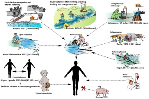 Modes of transmission of hepatitis E in developing countries. The settings for contamination of drinking water have been drawn in sketches, with epidemics reported in each case.