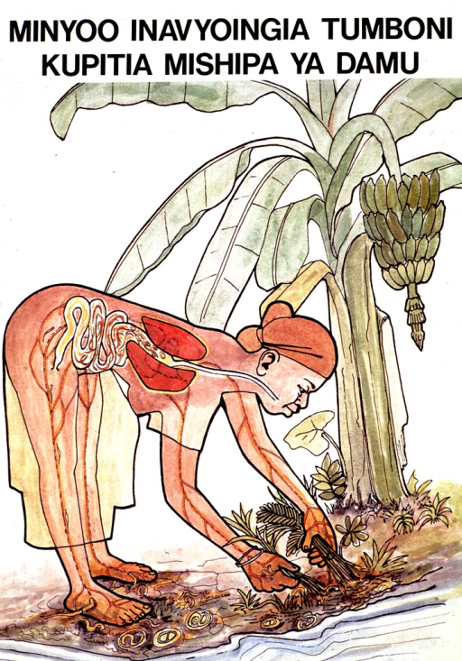 <p>White poster with black lettering.  Title at top of poster.  Title indicates that intestinal worms get in the stomach by means of veins.  Visual image is a color illustration of a woman harvesting some plants near a river.  There are worms in the soil and some are shown penetrating the woman's bare feet and hands.  Publisher and sponsor information on verso.</p>
