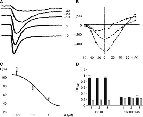 Whole-cell patch-clamp recordings from SCLC H146 cells showing expression voltage activated inward (Na+) currents. (A) A family of membrane currents activated at different membrane potentials (values in mV indicated on the right). (B) Current–voltage relationship of voltage-gated Na+ currents. Circles – normal data; triangles – effect of 100 nM TTX; squares – effect of Na+-free medium (choline+ used as substitute). (C) Dose–response curve for TTX-induced suppression of the Na+ current, I (%) expressed as a percentage of the control value. (A–C) Modified from Blandino et al (1995). (D) Effects of 100 nM TTX (1), 200 nM lidocaine (2) and 200 nM phenytoin (3) on endocytic membrane activity (HRP uptake) into the SCLC cell line, H510 (left-hand sets of histobars) and the normal airway epithelial cell line, 16HBE14o (right-hand sets of histobars). OD540, optical density of HRP content of cell lysates. Each data set of three histobars shows the effects of the following: HRP uptake (dark), endogenous peroxidase activity (white) and drug (grey) – TTX (1), lidocaine (2) or phenytoin (3). Each histobar represents the average±s.d. of data from at least six experiments. (D) Modified from Onganer and Djamgoz (2005).