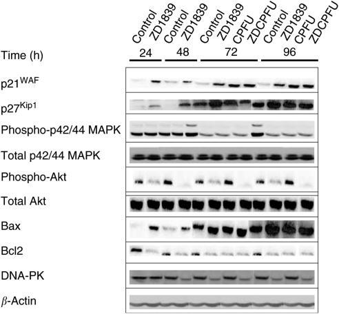 western blot materials and methods thesis Characterization of the pathogen-regulated arabidopsis bonzai1/copine1 protein and its role artifact signals in western blot 33 materials and methods.