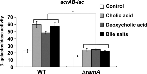 Requirement of RamA for induction of acrAB by bile. β-Galactosidase levels were assayed in WT (NKS505) or ΔramA (NES58) strains carrying the acrAB-lac transcriptional fusion. Cells were grown in LB medium (control) or LB medium supplemented with 0.25 mm cholic acid, 0.25 mm deoxycholic acid, or 0.25 mm bile salts. The data correspond to mean values from three independent experiments. Bars correspond to the standard deviation. Student's t test; *, p < 0.01 versus WT.