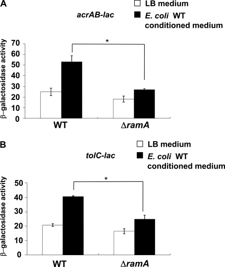 RamA induction of acrAB and tolC by conditioned medium of E. coli. The expression of acrAB (A) and tolC (B) determined by β-galactosidase assay using strains acrAB-lac (NKS505), ΔramA/acrAB-lac (NES58), tolC-lac (EG15109), or ΔramA/tolC-lac (NES65) grown in LB medium or conditioned medium from E. coli MG1655. The data correspond to mean values from three independent experiments. Bars correspond to the standard deviation. Asterisks indicate statistically significant differences (*, p < 0.01) in the paired Student's t test.