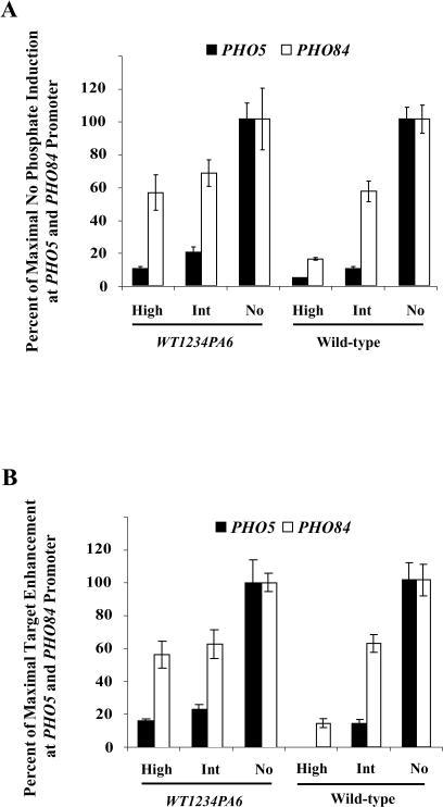 A Strain Expressing Pho4 That Cannot Be Phosphorylated on Site 6 Does Not Induce PHO5 in Intermediate-Phosphate MediumA strain expressing Pho4WT1234PA6 grown for 2 h in no-, intermediate-, and high-phosphate medium was analyzed by Northern blot analysis (A) and chromatin immunoprecipitation (B). The fold enrichment of PHO5 over ACT1 was 1.71, 2.42, 10.49, 0.99, 1.26, and 2.84 in lanes 1–6, respectively (PHO4WT1234WT6 high, PHO4WT1234WT6 int, PHO4 WT1234WT6 no, wt high, wt int, wt no). The fold enrichment of PHO84 over ACT1 was 24.64, 27.44, 43.74, 1.75, 4.27, and 6.28 in lanes 1–6, respectively.
