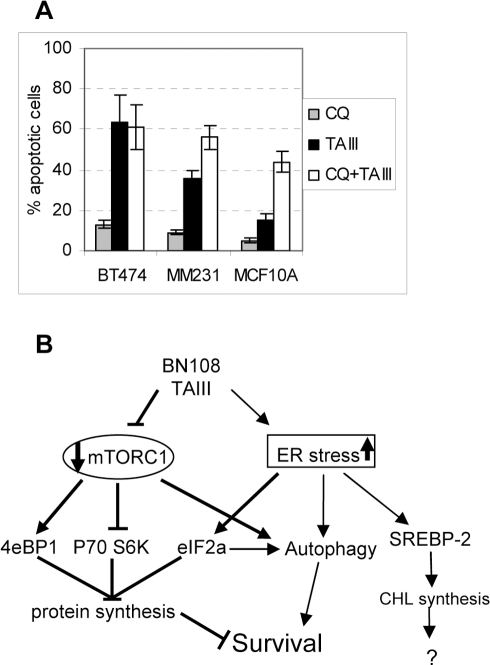 Autophagy induced by TAIII plays a protective role in cell death.A. Inhibition of autophagy augments apoptosis induced by TAIII in MDAMB231 and MCF10A cell lines, but not in BT474. Cells were pretreated for three hours with 20 µM of chloroquine (CQ) after which TAIII (4 µM for BT474, 5 µM for MM231 and 7.5 µM for MCF10A) was added for 24 hours. B. A cartoon illustrating the various cellular effects of BN108 and TAIII. The pathways induced selectively in cancer cells are shown in thicker lines.