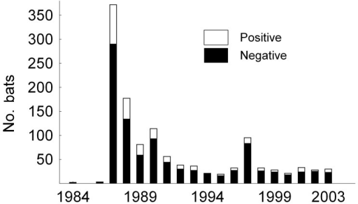 Number of submitted and lyssavirus antigen–positive samples from serotine bats, Eptesicus serotinus, collected in the Netherlands during the survey (1984–2003).