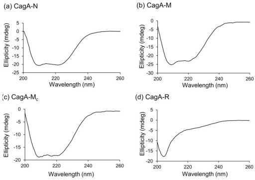 CD spectra of the recombinant CagA fragments.Ellipticity in the far-UV range (200–260 nm) is plotted for (a) CagA-N at 0.075 mg/ml, (b) CagA-M at 0.05 mg/ml, (c) CagA-Mc at 0.1 mg/ml and (d) Cag-R at 0.15 mg/ml.