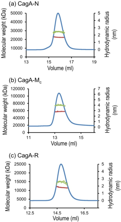 SEC and molecular weight (MW) and hydrodynamic radius determination of CagA-N (a), CagA-Mc (b) and CagA-R (c).Green dots superimposed on the peak indicate the MW as shown on the left-hand y-axis. Red dots represent the hydrodynamic radius calculated over the central portion of the elution peak (shown by UV trace in blue). The hydrodynamic radius values are shown on the right-hand y-axis.