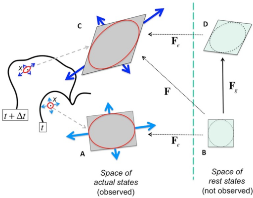 Formalization of plastic growth of a small region of wall.A tissue region is in general observed as a deformed object in a real tissue (A) due to local stresses internal to the tissue (light blue arrows). Taken outside its tissue context, without any stress on its borders, the region has a rest shape (B). Note that this rest shape is not actually observed. The transformation matrix to pass from the rest shape to the observed deformed shape is denoted . Due to changes in stress distribution in time, at a subsequent date the stress configuration acting on the region changes (dark blue arrows) and induces a new deformation of the region (C). If the intensity of the elastic deformation between the former rest shape (B) and the new deformed object (C) is above a certain threshold, then plastic growth is triggered: the rest shape is remodeled by the cell by adding material to the wall (D) which reduces the elastic strain. This change is made according to a constitutive rule that describes the material plasticity (see Model section below). As a result, the transformation  from the old rest state (B) to the new deformed state has been decomposed as a product of a reversible term  and an irreversible term  representing growth.