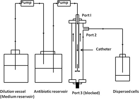 A novelin vitrobiofilm device integrated in a pharmacokinetic biofilm model system. The device was configured to simulate the in vivo condition in which the biofilms of C. albican on IV vascular catheter are under continuously perfusion with fresh medium and exposed to exponentially decreasing concentrations of antifungal agents.