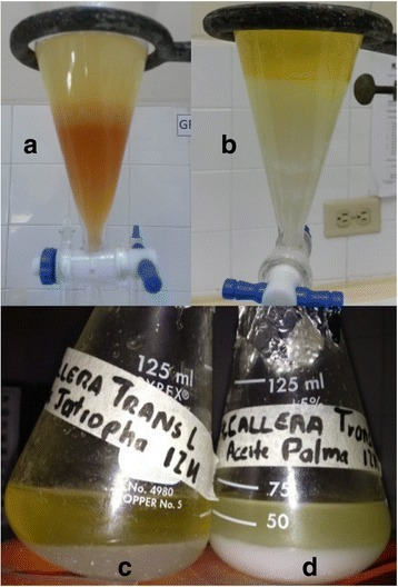 Enzymatic biodiesel produced with Jatropha and palm oil. a The alkaline-catalyzed biodiesel produces a reddish-brown glycerol phase. b Enzymatic biodiesel catalyzed by CA produced a cleaner (white) glycerol phase. c Jatropha biodiesel catalyzed by TL. d Palm biodiesel produced with TL enzymatic catalyst. One advantage of enzymatic biodiesel over alkaline catalyzed biodiesel is a cleaner, higher-quality glycerine by-product