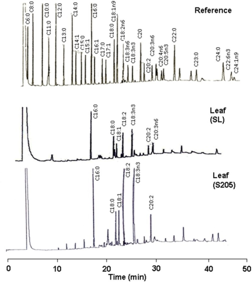 GC Chromatograms of Cyperus laxus leaf fatty acid extracts.Fatty acid profile in lipid extracts from the leaf of Cyperus laxus control plants cultivated in soil from the unimpacted site (SL) and from plants harvested from the phytoremediation systems of soil from the oil spill-impacted site containing 340 g/Kg THC (S205), compared to a mixture of true fatty acid derivatives (SUPELCO 37 Fame Mix) used as reference compounds.