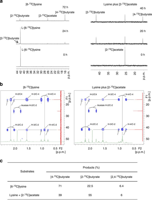 Elucidation of lysine pathway via 1H-decoupled 13C-NMR spectrum and 2D HMBC spectrum.(a) High-resolution 1H-decoupled 13C-NMR spectra showing L-[6-13C]lysine 13C-labelled fermentation products. [2-13C]butyrate, [2-13C]acetate and [4-13C]butyrate had a chemical shift of 42.33, 25.99 and 15.95 p.p.m., respectively. (b) 2D HMBC spectrum for [6-13C]lysine is shown. (c) Percentages of labelled butyrate fractions (see Supplementary Figs 2 and 3 for more details).