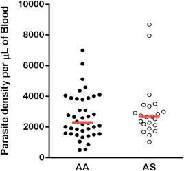 Comparison of parasite densities between both genotypic groups. Parasitaemia was determined by microscopy from Giemsa‐stained thick smears. Data are presented as scatter‐plots. The red line across indicates median value (P = 0·467, Mann–Whitney U‐test). [Colour figure can be viewed at wileyonlinelibrary.com]