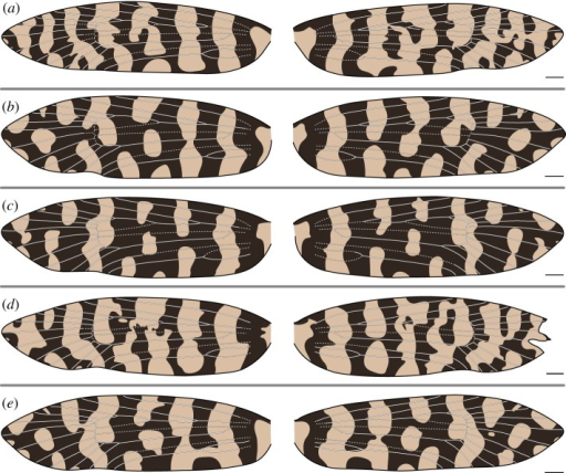 (a–e) Wing pattern and wing venation of female Moerarchis australasiella. All scale bars represent 1 mm.