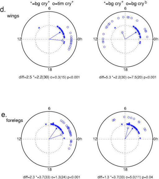 Circular phase analysis of luciferase expression in isolated body parts continued. All of the details of this figures are the same as in Figure 7. d) isolated wings. e.) isolated forelegs. Number of rhythmic samples for each group are given in Table 1.