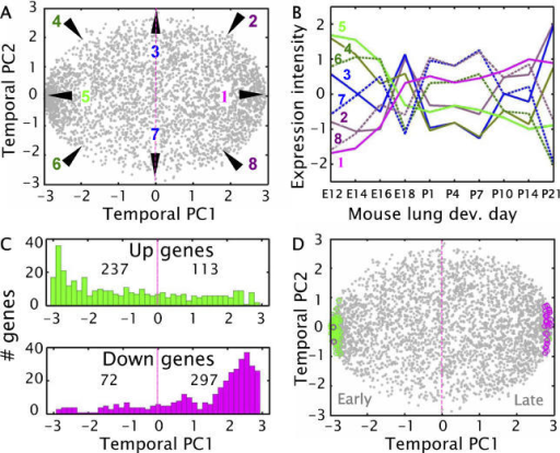 "Mouse Lung Development Profiles in Temporal PC Representation, and the General Developmental Profile Segregation of Up- and Down-Regulated Genes in Human Lung Cancer(A) Expression profiles of all 3,590 unique genes during mouse lung development as represented in temporal PC1 and PC2. Each dot marks a gene.(B) Developmental profile examples of genes at the periphery of the disc-like scatter plot in (A) at 45° (π/4 radians starting at ""3 o'clock"") rotational intervals.(C) Histograms of the mouse lung temporal PC1 coordinates of the 719 genes 2-fold significantly up- and down-regulated in any one of the four human lung cancer subtypes (χ2 = 168.338,p < 0.001, OR = 8.652).(D) The profiles of the top 100 genes (68 cancer up-regulated [green circles] and 32 cancer down-regulated [magenta circles]) composing the malignancy signature (seeResults) among all 3,590 mouse lung developmental gene profiles. Of the 68 cancer up-regulated genes, all but two are in the late developmental profile hemisphere. Of the 32 cancer down-regulated genes, all but two are in the early developmental profile hemisphere (χ2 = 82.5185,p < 0.001, OR = 544)."