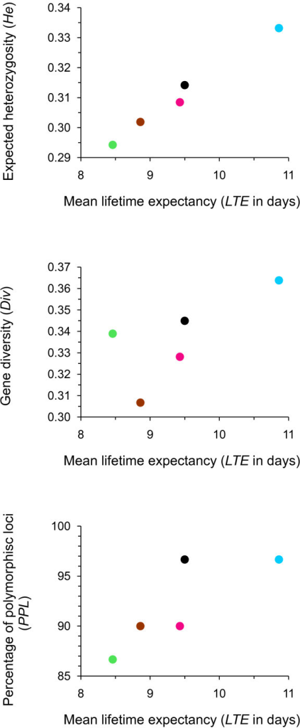 Genetic diversity was positively correlated with lifetime expectancy (LTE). Butterflies from local populations with the highest genetic diversity had a LTE up to c. 25% higher, directly affecting their individual fitness through lifetime reproductive success. Colours refer to sites in Figure 1.