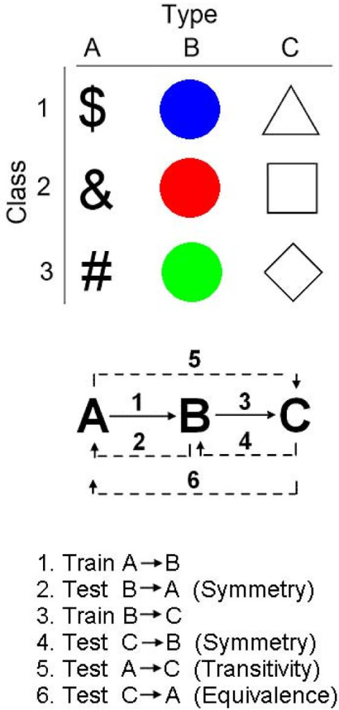 Top: Schematic of the three types of stimuli used: signs, colored disks, and geometrical forms. The objective of training was to form three classes of stimuli, with each class consisting of one sign, one color, and one geometrical form. Middle: Training related a stimulus from type A to a stimulus from type B, the A → B relations, and a stimulus from type B to a stimulus from type C, the B → C relations (solid arrows). All other relations among the stimuli were not trained (punctuated arrows). Instead, they were tested. Bottom: Sequence of relations trained and tested. Numbers refer to the arrows in the middle display.