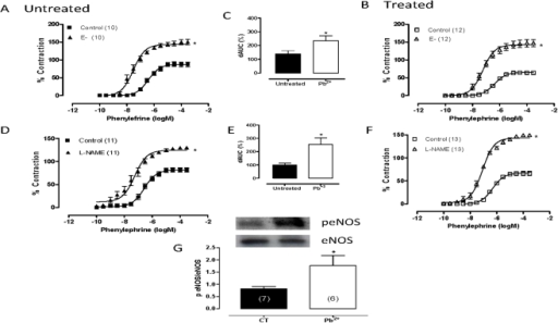 The effects of endothelium removal (E−) (A, B) and NG-nitro-L-arginine methyl ester (L-NAME, 100 µM) (D, E) on the concentration-response curve for phenylephrine treatment in aortic rings from untreated (CT) and lead-treated rats (Pb+2).The inset shows differences in area under the concentration-response curves (dAUC) in endothelium–denuded and intact segments (C) and in the presence and absence of L-NAME (F). Densitometry analyses of western blots for endothelial nitric oxide synthase (eNOS) and phosphorylated endothelial nitric oxide synthase (p-eNOS) protein expression in aortas from untreated (CT) and lead-treated rats (Pb+2) (G). Representative blots are also shown. *P<0.05 by Student's t-test. Number of animals used is indicated in parentheses.