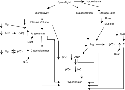 Proposed mechanisms showing how decreased atrial natriuretic peptide can cause severe hypertension secondary to dust inhalation, microgravity, and hypokinesia.Abbreviations: Catecholamines, epinephrine, norepinephrine, increased by dust; VC, vessel constriction; VD, vessel dilatation; Mg, magnesium ions; ANP, atrial natriuretic peptide; hypokinesia, decreased movement; angiotensin, angiotensin effect, increased by dust; NO, nitric oxide (endothelial derived relaxing factor); E, endothelin, increased by dust.