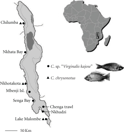 Lake Malawi Africa Map.Map Of Lakes Malawi And Malombe East Africa Sampling Open I