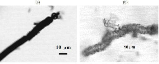 Optical microscopic images of (a) CMC-COOH and (b) hollow silica microcoil prepared using CTAB.