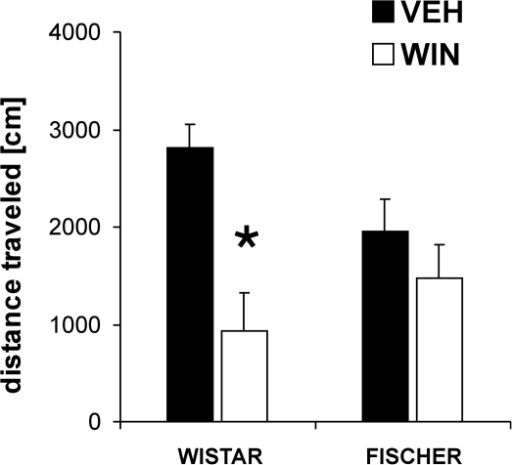 Strain specific effects of the cannabinoid receptor agonist WIN 55,212-2 (WIN) on locomotor activity.Wistar and Fischer rats did not differ significantly in their basic locomotor activity. However, an acute injection of WIN (2 mg/kg) had a stronger inhibitory effect on distance traveled in Wistar than in Fischer rats. Values are expressed as means ± SEM (p<0.05 is indicated by asterisks).