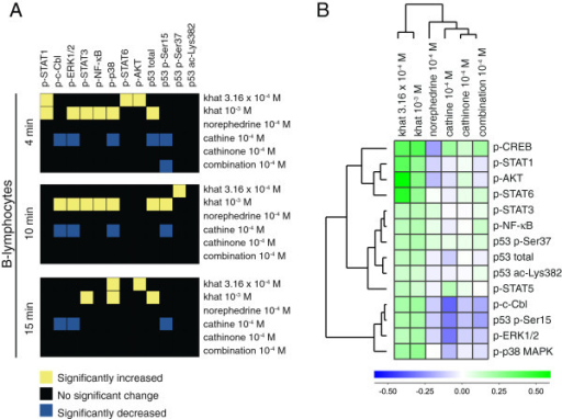 Signal transduction in B-lymphocytes. (A) Heatmap of statistical significant changes in protein-modification levels and total protein levels in B-lymphocytes. (B) Unsupervised hierarchical clustering analysis of the different stimuli and signal transduction proteins in B-lymphocytes following 15 minutes of stimulation.