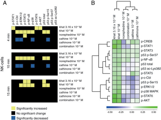 Signal transduction in NK cells. (A) Heatmap of statistical significant changes in protein-modification levels and total protein levels in NK-cells. (B) Unsupervised hierarchical clustering analysis of the different stimuli and signal transduction proteins in NK-cells following 15 minutes of stimulation.