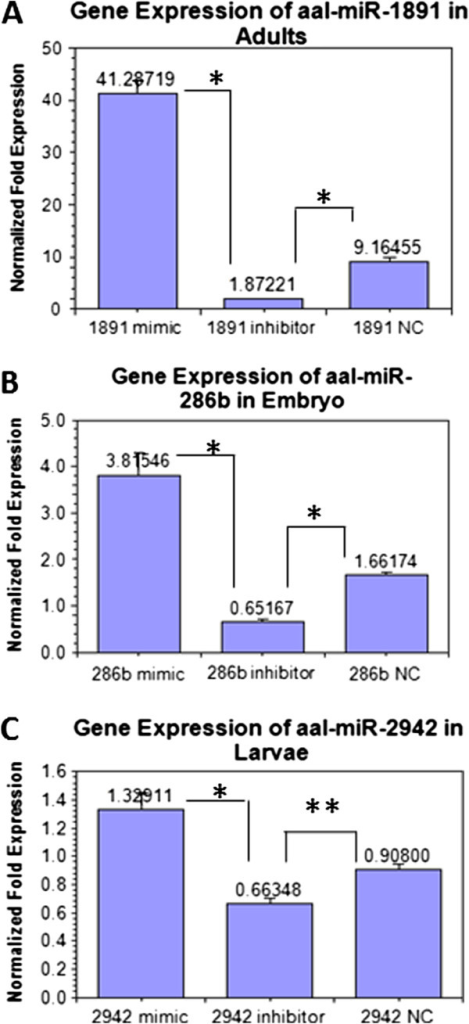 Relative expression analysis after miRNA interference with three miRNAs in developmental stages of Ae. albopictus by Bulge-loop miRNA qPCR. (A) Relative gene expression of miR-1891 in adults analyzed by ANOVA (F = 180.22, p < 0.001) (B) Relative expression of miR-286b in embryo analyzed by ANOVA (F = 32.908, p < 0.001) (C) Relative expression of miR-2942 in larvae analyzed by ANOVA (F = 19.648, p = 0.002). * A significant decrease (p < 0.001) of expression in inhibitor group compared with the negative control group (analyzed by statistical method of ANOVA by LSD). ** No significant difference (p > 0.05) in expression level between inhibitor and negative control group (analyzed by statistical method of ANOVA, LSD). In all miRNA qPCR quantifications, the relative gene expressions from normal controls are calibrated to 1 (not shown in graph). Error bars show the SEM of three biological replicates, each containing one adult male/female.