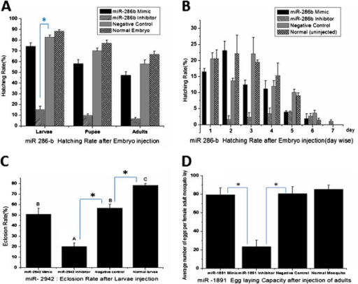 Functional study of miRNA intervention after miR-mimic and inhibitor injection in Aedes albopictus developmental stages. [A] Hatching rate of embryo after miR-286b injection with mimic, inhibitor, negative control and normal un-injected embryos. * A significant difference (p < 0.001) of inhibitor group with the negative control group in hatching rate of eggs into larvae (statistically analyzed by ANOVA, LSD). The error bar shows the SD of values from three independent experiments, and is statistically evaluated by ANOVA (F = 191.557 & p < 0.001). [B] Daily hatching after embryo injection with miR-286b mimic, inhibitor, negative control and normal un-injected embryo. The 1st hatching day is 2 days after the microinjection. The error bar shows the SD of values from three independent experiments. [C] Eclosion rate in larvae after miR-2942 injection with mimic, inhibitor, negative control and normal un-injected embryo analyzed statistically by ANOVA (F = 38.193 & p < 0.001). * A statistically significant difference (p < 0.001) of inhibitor group with the negative control group and other two groups (statistically analyzed by ANOVA, LSD). A, B, C indicates statistically significant difference (p < 0.001) between the groups (statistically analyzed by ANOVA, LSD). The error bar shows the SD of values from three independent experiments. [D] Fecundity rate after miR-1891 injection. Result analyzed by ANOVA (F = 58.886 and p < 0.001). *A significant decrease in mean eggs per female in inhibitor group (p < 0.001) compared with negative control group (statistically analyzed by ANOVA, LSD) and all other groups observed. The error bar shows the SD of values from three independent experiments.