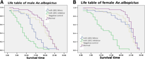 Longevity (Life table) of male and female adult Ae. albopictus after miR-1891 intervention. (A) Life table of male Ae. albopictus. A significant decrease in survival ratio was shown after miR-1891 inhibitor injection in adults (p < 0.001). Statistical analysis by Kaplan-Meier showed X2 =33.326, p < 0.05 (B) Life table of female Ae. albopictus. Statistical analysis by Kaplan-Meier showed X2 = 4.274, p < 0.05.
