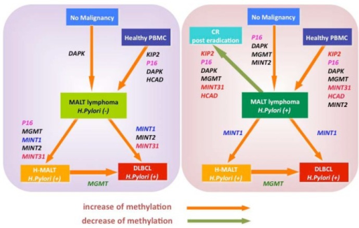 Schematic illustration of development and progression of gastric lymphoma in terms of specific gene methylation. Genes associated with orange arrows indicate significant increase of methylation frequency from arrow start point status to end point status. On the other hand, genes associated with green arrow show statistically significant decrease of methylation frequency from start-point to end-point status (p < 0.05). Left panel: schematic illustration of H. pylori (-) L-MALT-related diseases in terms of CpG hypermethylation; right panel: schematic illustration of H. pylori (+) L-MALT related diseases in terms of CpG hypermethylation.