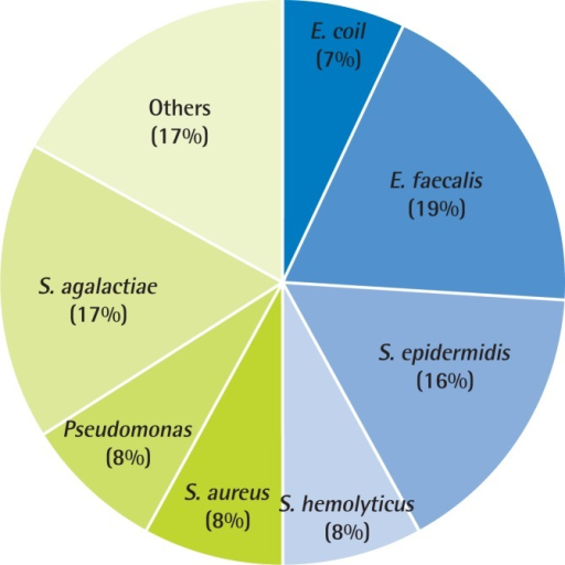 Evidence of chronic bacterial prostatitis in primary care clinic (n=77). The microbial pathogen distributions in a primary care clinic in Korea. The most common pathogen in primary care clinic was Enterococcus faecalis (19%), followed by Streptococcus agalactiae (17%), Staphylococcus epidermidis (16%), Staphylococcus hemolyticus (8%), Staphylococcus aureus (8%), and Pseudomonas (8%). E. coli, Escherichia coli.