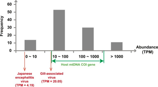 Abundance level (transcripts per million—TPM) of the RdRp genesfrom the negative-sense RNA viruses detected in this study.Abundance is calculated after the removal of ribosomal RNA reads. As acomparison, we show the abundance of the two well characterized(positive-sense) RNA viruses: Japanese encephalitis virus andGill-associated virus found in the Mosquito-Hubei and Shrimp libraries,respectively, as well as the range of abundance of host mitochondrial COIgenes in these same multi-host libraries.DOI:http://dx.doi.org/10.7554/eLife.05378.008