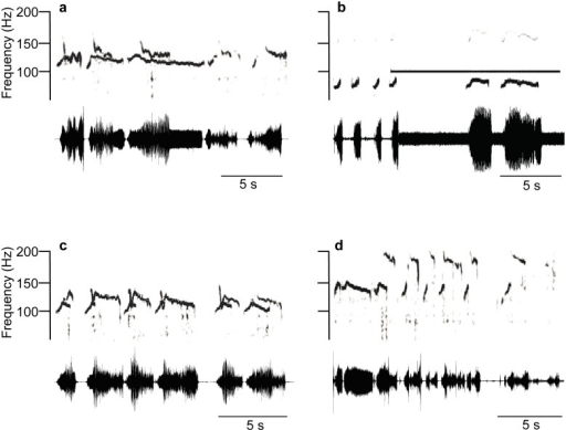 Changes of overlapped Eushistus heros FS-1 and MS-1 pulse time and frequency characteristics.Sonograms (above) and oscillograms (below) of (a) increased FS-1 pulse duration when overlapped by MS-1 signals or (b) by 100 Hz/0.69 mm/s pure tone. c: the U-shaped FM sweep of MS-1 pulses masked by FS-1 signals. d: the increased frequency and decreased duration of MS-1 pulses in a duet with FS-1 signals.