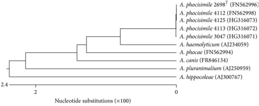 Dendrogram analysis of 16S rDNA sequences of the A. phocisimile strains of the present study and reference strains of genus Arcanobacterium obtained from NCBI GenBank.
