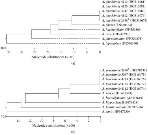 Dendrogram analysis of sequences of the genes rpoB (a) and gap (b) of the A. phocisimile strains of the present study and all other species of genus Arcanobacterium obtained from NCBI GenBank.