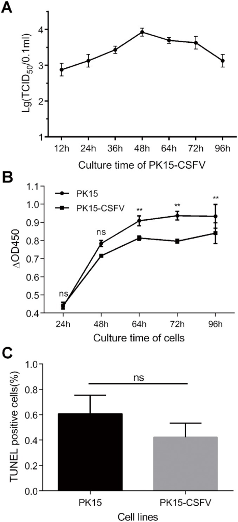 Biological characteristics of PK15-CSFV cells.PK15-CSFV cells were seeded into 6- or 96-well plates and cultured for indicated time points to detect the virus titer, cell viability and apoptosis. (A) Growth curve of CSFV in PK15-CSFV cells. (B) Viability of PK15-CSFV cells by CCK–8. (C) Proportion of TUNEL-positive cells at 72 h. Data are represented as means ± SD (n = 3 or 5; ns, P > 0.05; *P < 0.05; **P < 0.01).