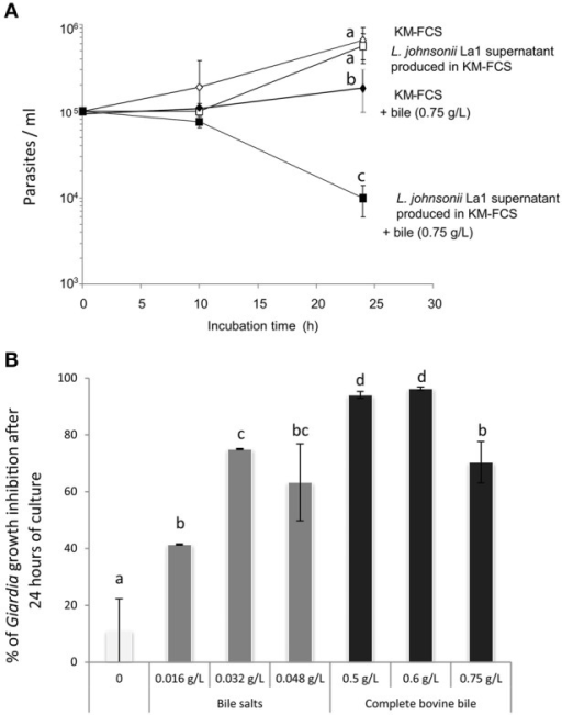 (A) The inhibitory effect of L. johnsonii La1 supernatant on G. duodenalis growth is observed after 24 h in the presence of bovine bile. G. duodenalis trophozoites were grown in KM-FCS with bovine bile (0.75 g/L, final concentration) in the presence (■) or in the absence (♦) of bacterial supernatant, or without bovine bile in the presence (□) or in the absence (◊) of bacterial supernatant. The parasite concentration was estimated by counting live cells with a Malassez cell chamber. Values are the mean ± SD of two independent experiments performed in triplicate. Letters indicate significant differences between treatments (Kruskall-Wallis, p < 0.05). (B)G. duodenalis growth inhibition by L. johnsonii La1 supernatant depends on the presence of bile, more specifically of bile salts. G. duodenalis trophozoites in KM-FCS were incubated for 24 h with L. johnsonii La1 supernatant and various concentrations of mixed bile salts (0.016, 0.032, 0.048 g/L, final concentration) or complete bovine bile (0, 0.5, 0.6, 0.75 g/L, final concentration). Growth inhibition values (%) were normalized according to controls in lactic acid-acidified KM-FCS supplemented with similar concentrations of bovine bile or mixed bile salts. Values are the mean ± SD of three independent experiments. Letters indicate significant differences between treatments (Kruskall-Wallis, p < 0.05).